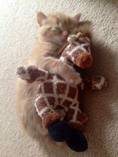 A Cat Hugging A Giraffe. I can't resist the cuteness!