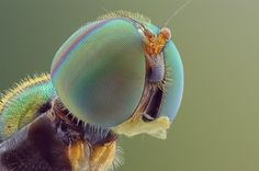 Beautiful+Macro+Photos+Reveal+Tiny+Insects+With+Hundreds+Of+Hypnotizing+Eyes