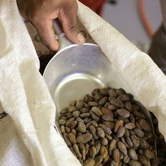 We are busy roasting our cocoa beans.the first step in the chocolate making process. Chocolate Making, How To Make Chocolate, Dog Food Recipes, Cocoa, Beans, Photo And Video, Dog Recipes, Theobroma Cacao, Hot Chocolate