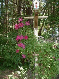 Clematis up pole. I usually have 3-4 bird houses up there but they rot and I change them. I love feeding the birds and have 3 stations plus a hummingbird station.