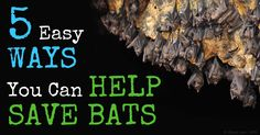 A single bat can eat up to 4,500 insects for dinner each night, which makes bats an invaluable and all-natural method of insect control. http://healthypets.mercola.com/sites/healthypets/archive/2015/07/14/declining-bat-population.aspx