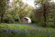 Dome at Fforest, surrounded by bluebells