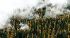 Top 7 erdő Európában vonattal Forest Photography, Wildlife Photography, Digital Photography, Photography Tips, Forest Pictures, Foggy Forest, Photoshop, Stock Foto, End Of The World