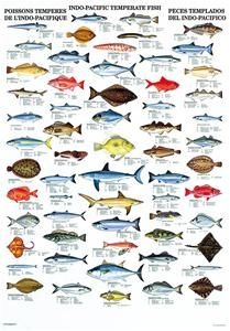 Indo-Pacific Temperate Fish