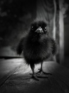 "way. too. cute. ""baby Raven"" by ______?????"