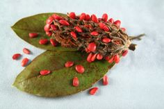 Magnolia seed pods, which resemble exoticlooking cones, spread open to reveal bright red berries. Inside the berries, you'll find the magnolia seeds. Get tips for growing magnolia seeds in this article.