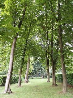 """South transept of Whipsnade Tree Cathedral, Dunstable - planted by Edmond Blyth after the First World War in a spirit of """"faith, hope and reconciliation"""" - begun in 1932 - first religious service at site in Woodland Wedding, First World, Canopy, Acre, Grass, Cathedral, England, Places, Garden"""