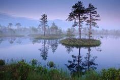 Männikjärve bog in Endla Nature Reserve, Estonia  #colourfulestonia #visitestonia