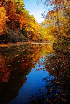 Bur Oak, Ohio.