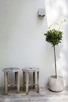 i am going to buy a bay tree today... only mine will have to live in the garden.  love this!!!