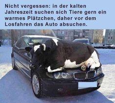Achtet im Winter bitte auf die bedürftigen Tiere! Mehr lustige Bilder gibts auf FUNgesteuert - Lustige Bilder, witzige Videos und Sprüchebilder.