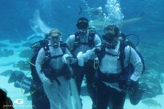 At Omega divers Chania, we always suggest that you scuba dive with people you know and with locals. Diving is a great way to meet new […] Underwater Wedding, All About Water, Georgia Aquarium, Sports Marketing, Sharm El Sheikh, Best Sunset, Water Life, Environmental Issues, Underwater World