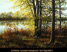 La Baie Parisienne Trunks, Plants, Drift Wood, Flora, Plant, Planting