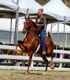 Undulata's Little King ERB is winding up for his 3 year old year, working this week at Diamond Jubilee.