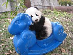 Rocking Panda