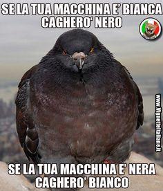 Il piccione colorato  (www.VignetteItaliane.it)