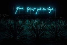 Olivia Steele lights