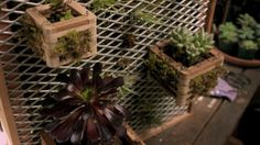 DIY Vertical Garden Kit: Just Add Water (and a Wall) by Remodelista Team Issue 21 · On the Lawn · May 24, 2012