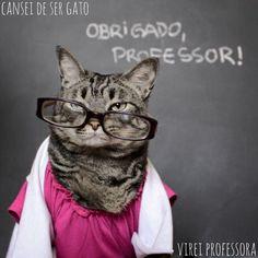 Dia do professor - cansei de ser gato