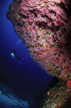 Deep sea diving in Bouches du Rhone - Marseille, France