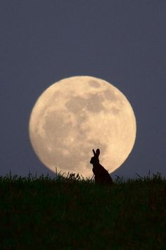 "Hare at moon rise - ""Moongazer"" by Steve Adams. °"