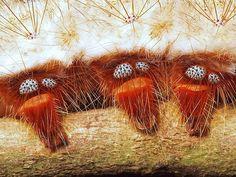 Moth Caterpillar | Flickr - Photo Sharing!