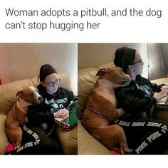 Uplifting So You Want A American Pit Bull Terrier Ideas. Fabulous So You Want A American Pit Bull Terrier Ideas. Cute Funny Animals, Funny Animal Pictures, Cute Baby Animals, Funny Cute, Funny Dogs, Funny Pitbull, Dogs Pitbull, Cute Puppies, Cute Dogs