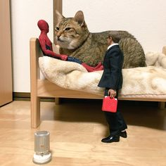(2) @co_yumiko/Cat&DogさんはTwitterを利用しています