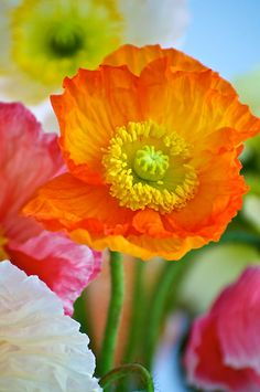 ~~Impressionistic Poppy ~~   Bright & Beautiful   ╰⊰⊹✿ ✿⊹⊱╮
