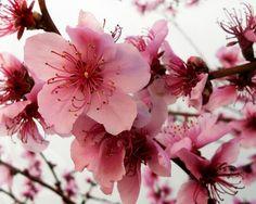 Blossoms by marilenavaccarini