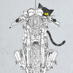 Moto Art - Cat Racer
