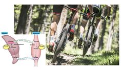 ¿Qué se puede hacer para no tener ácido láctico con la bici?