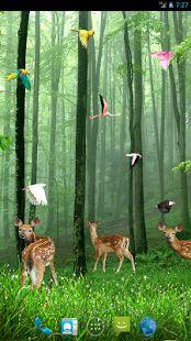 Rain forest Live wallpaper