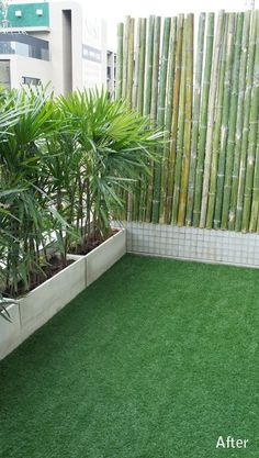 bangkok balcony designer - love this simple effect with bamboo and potted palms - balcony garden 100 - New Room - Balkon Apartment Balcony Garden, Apartment Balcony Decorating, Balcony Plants, Apartment Balconies, Indoor Plants, House Plants, Apartment Plants, Privacy Plants, Patio Privacy