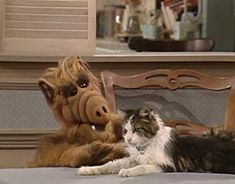 """""""you are a bagel"""" Alf! Old Tv Shows, Best Tv Shows, Cute Cats, Funny Cats, Alien Life Forms, Tiger Beat, 80s Kids, Best Memories, Childhood Memories"""