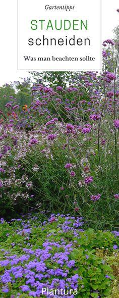 Stauden richtig schneiden: Was muss man dabei beachten? Hättet Ihr alles gewusst? Hydrangea Petiolaris, Herbaceous Perennials, Plants, Gardening, Makeup, Top, Inspiration, Patio, Ground Cover Plants