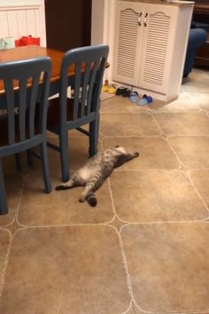 That Cat feels very safe in that home to sleep like that with his belly out. Funny Cute Cats, Cute Cats And Kittens, Cute Funny Animals, I Love Cats, Crazy Cats, Kittens Cutest, Cute Animal Videos, Funny Animal Pictures, Beautiful Cats