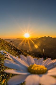 Bonito amanecer | Pretty sunrise - #flores #flowers