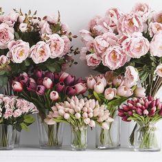 Peonies or roses, orchids or tulips, hydrangeas or magnolias – what's your s… Pfingstrosen oder Rosen, Orchideen oder Tulpen, Hortensien oder Magnolien – was ist [. Peonies And Hydrangeas, Tulips Flowers, Beautiful Flowers, Prettiest Flowers, Peonies Centerpiece, Blush Wedding Flowers, Tulip Bouquet, Tulips Garden, Rose Arrangements