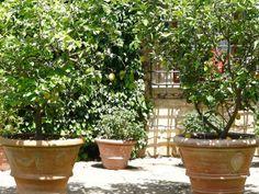 Lemon trees,  in big gorgeous Italian pots... { the vintage wren }: { CASTELLO di VERRAZZANO Winery }