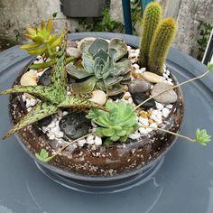 My first #succulent & #cactus #terrarium #glass #glassbowl #nofilter #echeveria #aloe by jaga555