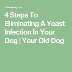 There are 4 vital steps to restore dog yeast infection to good health. We walk you through the process of naturally eliminating dog's bacterial skin problem. Dogs Ears Infection, Yeast Infection Causes, Recipes With Yeast, Dog Food Recipes, Yeast In Dogs, Yeast Infection Essential Oils, Coconut Oil For Dogs, Healthy Pets, Old Dogs