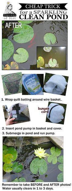 Clear Water Trick that Improves Murky Pond Water in Hours Cheap trick for a sparkling, clean pond (and eco-friendly too).Cheap trick for a sparkling, clean pond (and eco-friendly too). Outdoor Ponds, Outdoor Gardens, Backyard Ponds, Garden Ponds, Eco Garden, Backyard Waterfalls, Outdoor Fountains, Pond Landscaping, Goldfish Pond