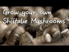 How to grow your own mushrooms.