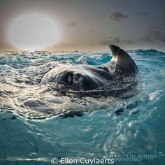 September 2014 – UW Photo Contest Winners | 1st Place - Ellen Cuylaerts! APOCALYPSE