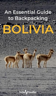 Things to Do in Bolivia: Top things to do in La Paz, Sucre, Potosi, and more. Bolivia travel guide for backpacking or independent travel. Backpacking Europe, Europe Travel Tips, Packing Tips For Travel, Travel Deals, Travel Essentials, Travel Guide, Europe Packing, Traveling Europe, Packing Lists