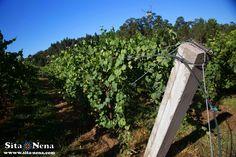 Martín Códax - Albariño wine #esenciamartincodax of Bodega Martin Codax #experienciasmartincodax - Exploring Albariño wine, Rías Baixas, Galicia.  Follow #sitanena family recipes, travel & much more at http://www.sita-nena.com/blog/  *Photo made by: Luis A.