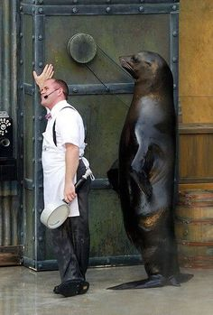 """Man: """"What did you say? A Big Seal is behind me?!  Haha!  Oh sure there is!  Pull the other one will you ~ if I believed that ~ I'd believe anything!"""""""