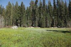 Las especies más antiguas y grandes en peligro de extinción http://www.consumer.es/web/es/medio_ambiente/naturaleza/2013/07/17/217255.php