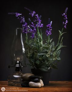 Still Life by Mohammed Abdulsalam on 500px